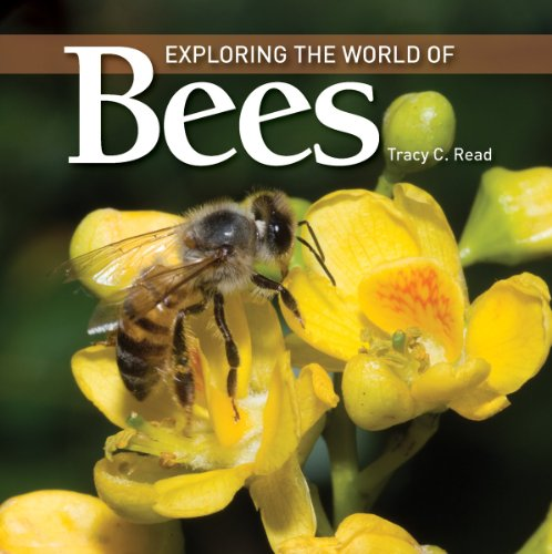 Image for Exploring the World of Bees